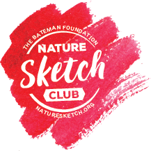 BFnaturesketch logo 72DPI